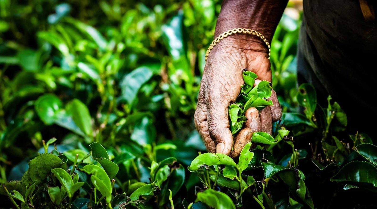 Phân tích chiến lược marketing của Phúc Long Coffee: Từ Lâm Đồng tới ông trùm Big 3 ngành coffee marketingreview.vn
